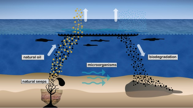 arctic oil seep biodegradation_inline